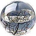 Ecosphere Nasa Ökosystem - 23 cm