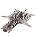 Zebrafell Steppenzebra